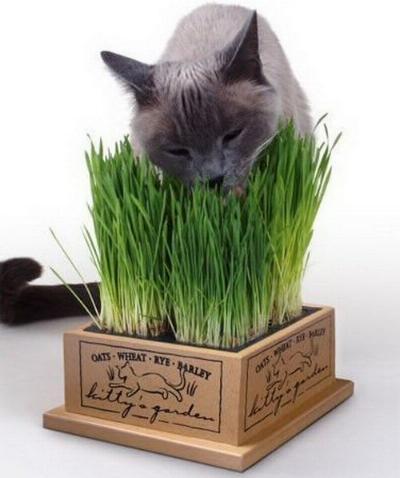 alimentazione gatto erba
