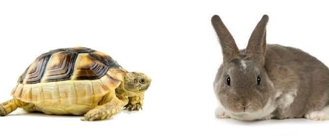 animali esotici