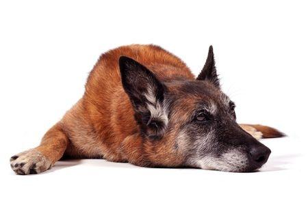 cane anziano1