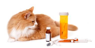 gatto diabete 3