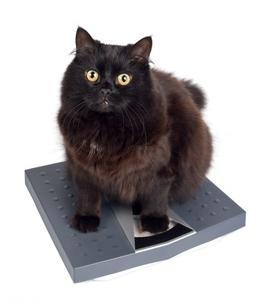 obesit2