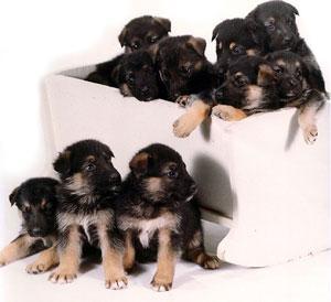 separazione_cuccioli