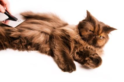 spazzolatura gatto