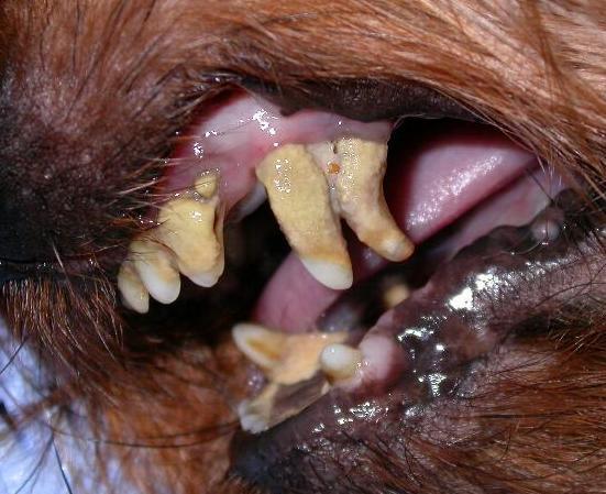 Denti con notevole deposito di tartaro