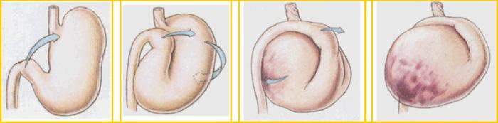 Sequenza di torsione e dilatazione dello stomaco