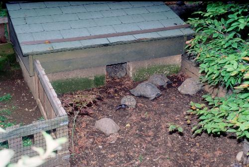 Casetta per tartarughe