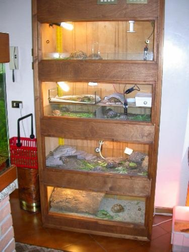 Terrari di vetro inseriti in uno scaffale rivestito di legno