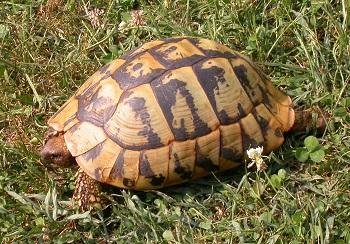 Il letargo delle tartarughe for Laghetto tartarughe inverno